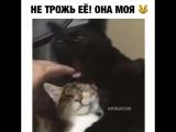 Не трожь её, она моя!