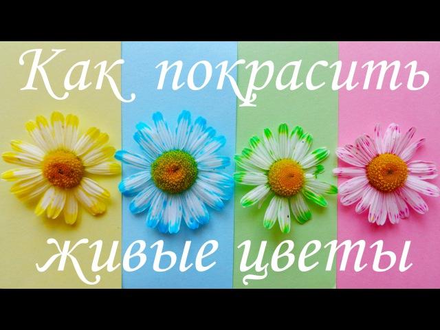 Как покрасить живые цветы! Опыты для детей!