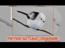 Рисунок пастелью Ополовник / Pastel speed drawing Long-tailed tit