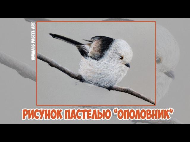 Рисунок пастелью Ополовник / Pastel speed drawing Long-tailed tit » Freewka.com - Смотреть онлайн в хорощем качестве