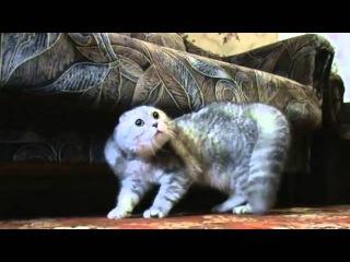 Глупые коты