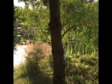 Прогулки по саду.1