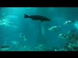 Обзорное видео большого аквариума