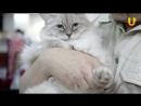 Глазами животных, выпуск 278 («Удачный кот» - порадовал жителей и гостей Уфы, часть 2)