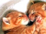 Котята, киски, котятки, котяпки... Смотрим и наслаждаемся!