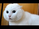 котики. коты. киски. няшные котята. cats