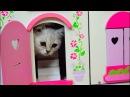 💖 КОТЕНОК 🐈 🏰 ИГРАЕТ В ЗАМКЕ смешные коты и котята 2016 NEW