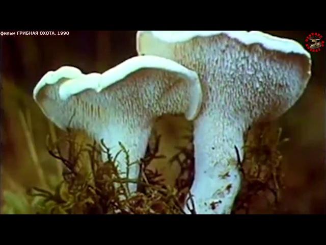 фильм Грибная охота, голос Смоктуновского, док фильм времен СССР, www.grib.tv