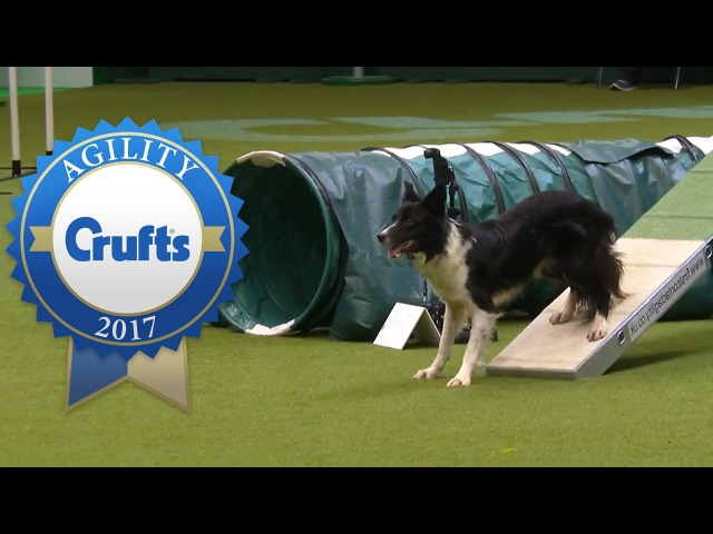 Agility Championship Final   Crufts 2017