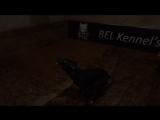 BEL KENNEL'S BLACK FOG