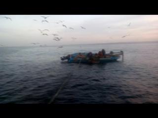Рассвет ,Работа,-Рыба, Чайки мило с верху ..... Люди и Дельфины.