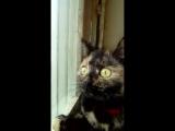 Мою кошку замкнуло