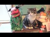 Кот Мару из Японии
