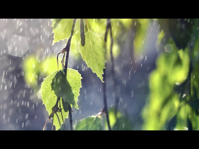 Best Ever Chinese Bamboo Flute Zen Relaxing Music Playlist- Over 2500 Likes for Meditation Spa Yoga