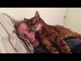 Your face pleases me human! Tonto the bengal cat approves of the girlfriend )