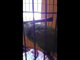 птичка плачет