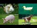 Карточки Домана Часть 1 Домашние животные