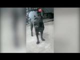 Пёс батальона