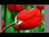 Очарование цветка. Муз. Игорь Двуреченский. Автор ролика Тамара Ветошева