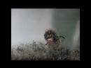 «Ёжик в тумане» (1975), реж. Юрий Норштейн HD 1080