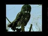 Anton Newcombe feat. Nameless - Carpathian Dub (UFO PAYCHECK)