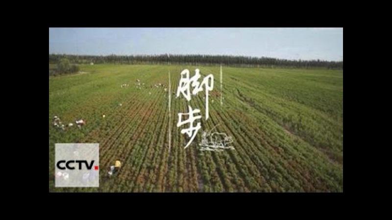 Китай на кончике языка 2 01