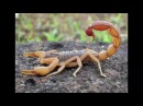 Ветер перемен Wind of Change Scorpions Cover Russian