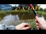 Хороший Сазан на удочке (Сазан видео в сентябре) Сазан осенью в озерце.