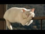 Самые Прикольные  Животные Котики - спящие Коты и Киски