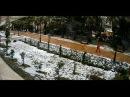 Пальмы и снег в Сочи