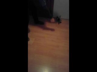 Грайливе кошеня