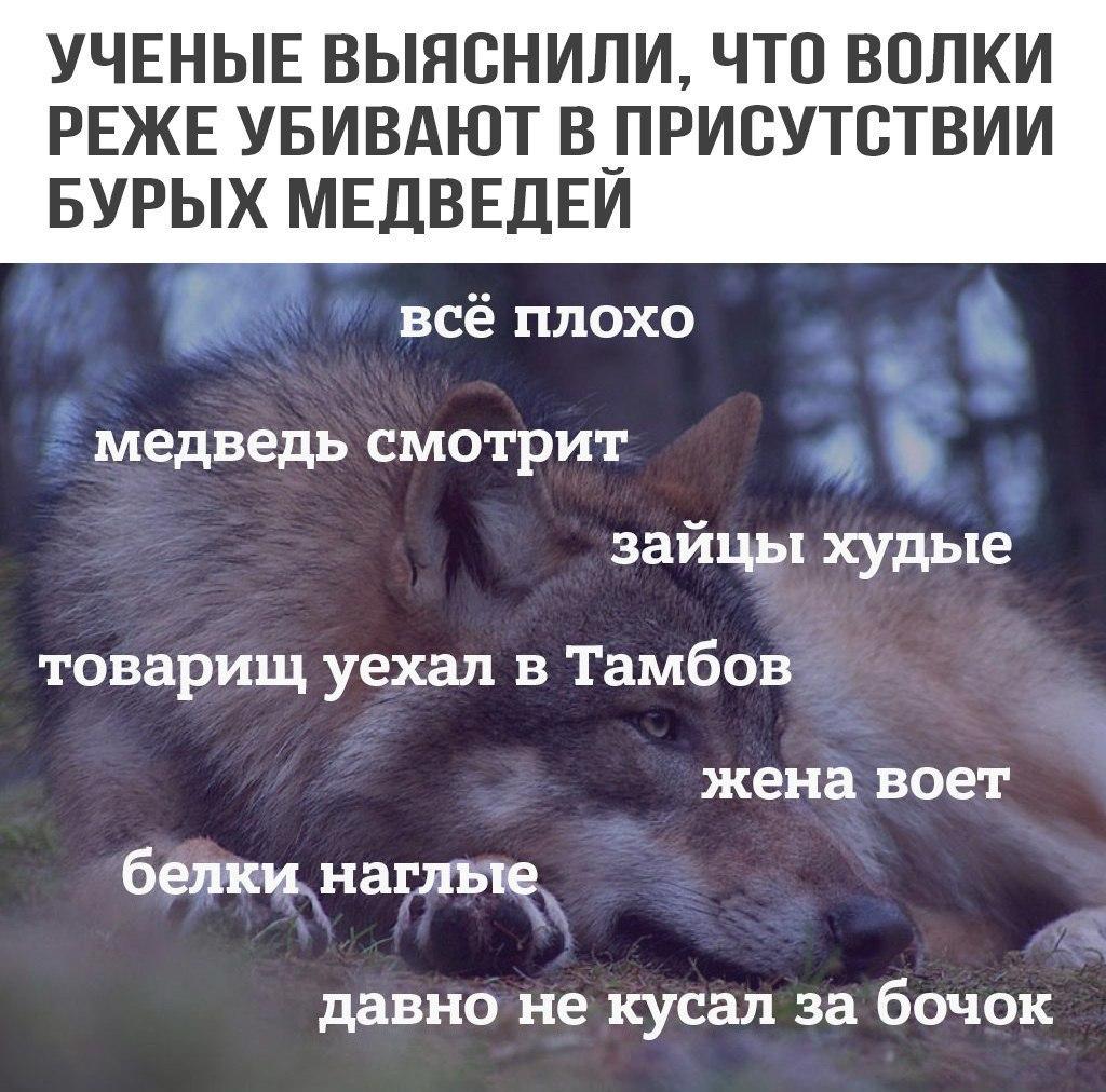 https://pp.userapi.com/c637728/v637728181/5aab5/fDgJdXnDYdU.jpg