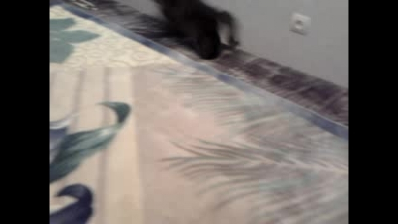 Video-2012-09-16-07-15-07