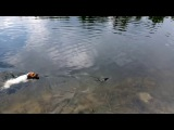 Ёзи, ловит рыбу!)