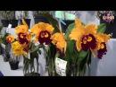 Выставка Орхидей в Тайвань