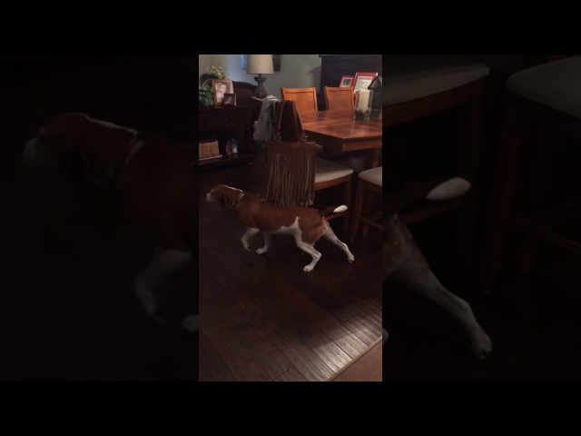 Dog loves ticklish fringe