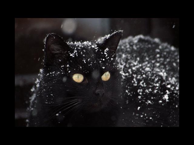 Тета медитация Перевоплощение в кошку
