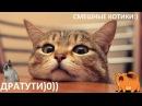 Без кота жизнь не та! Смешные котики, милые котики 777 Fan