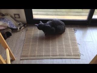 Сбой прошивки котэ / Cat firmware failure