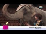 ТНТ. «AZH MODEL» в цирке со слонами
