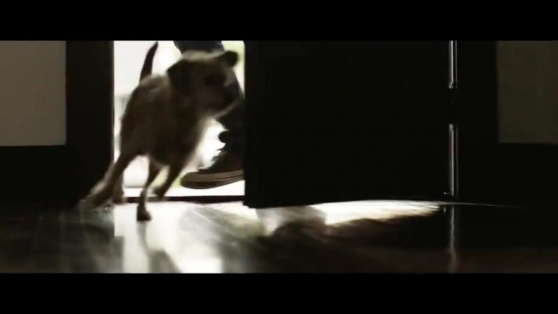 Животные спасают от одиночества  Для агентства недвижимости Coldwell Banker...