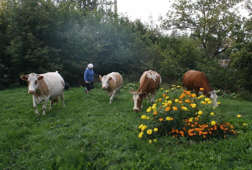 Здесь же пасутся коровы (07.12.2016)