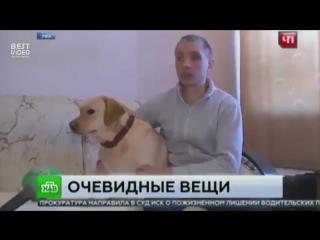 Слепого заставили купить билет для собаки поводыря