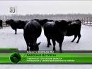В Макушинском районе создают сельхозкооператив