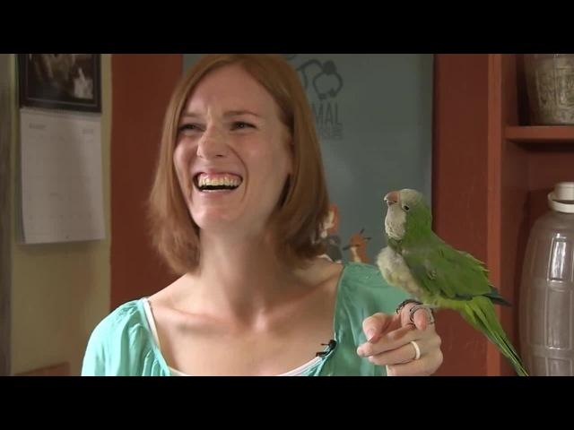 Chopsticks the Quaker Parrot is Hilarious · coub, коуб