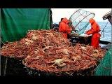 Крабовая Мафия Браконьерство / Crab Mafia Poaching