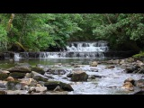 Relaxing Nature Sounds of a Soothing Waterfall with Forest Bird Song