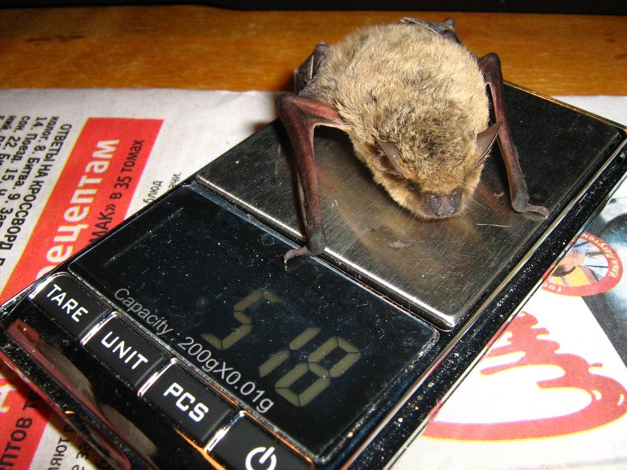 У Харкові копи вятували кажана - фото 1