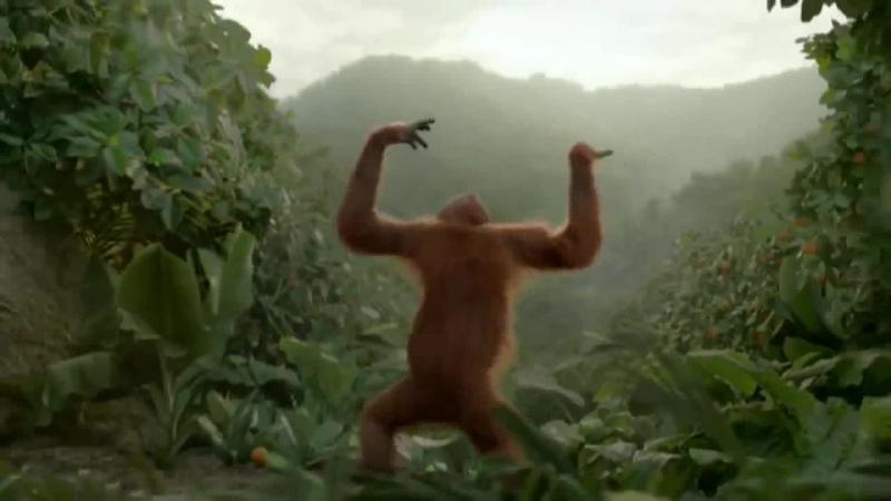 Танцующая обезьяна. Всем хорошего дня