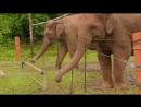 """"""" Гении из царства животных """" Фильм - 2 ( 2012 ) ..."""